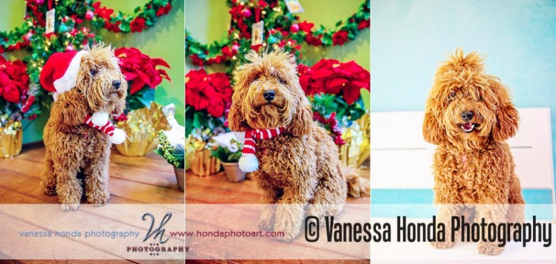 Holiday Pet Portraits at Muttropolis {Orange County Pet Photographer}