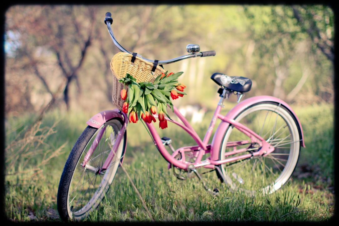 bike-with-flowers-for-spring-mini-session