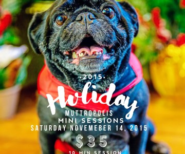 Holiday Mini Sessions for your pet at Muttropolis {Orange County Pet Photographer}