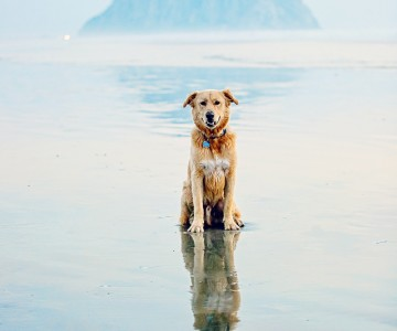 Morro Rock Pup {iheartfaces contest entry pet portraiture}