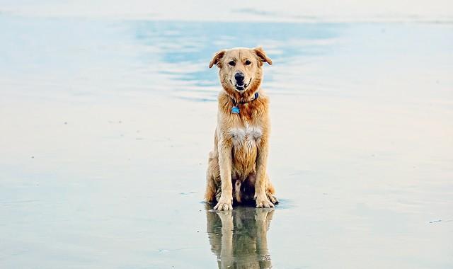 Morro Rock Pup {iheartfaces contest entry pet portraiture}