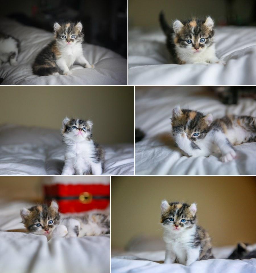 Cali kitten 2