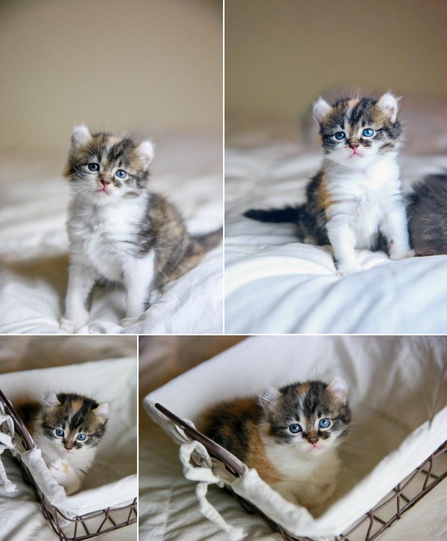 Cali kitten 5