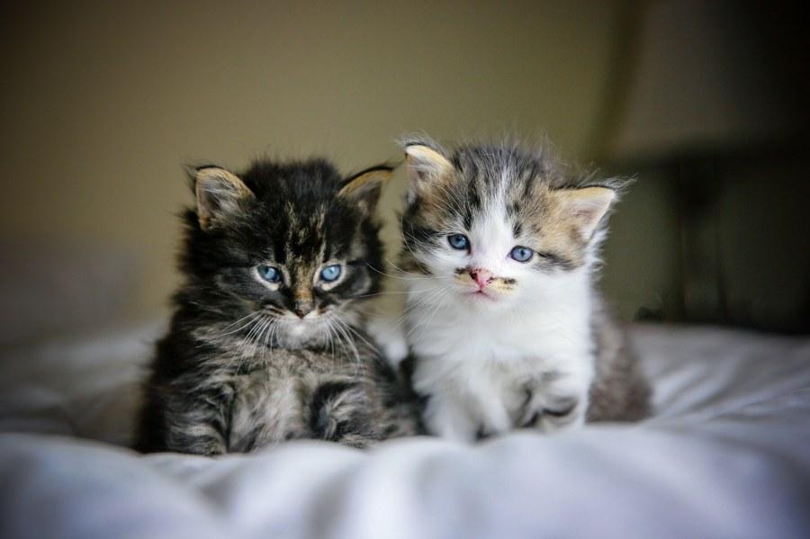Charlie Kitten 1