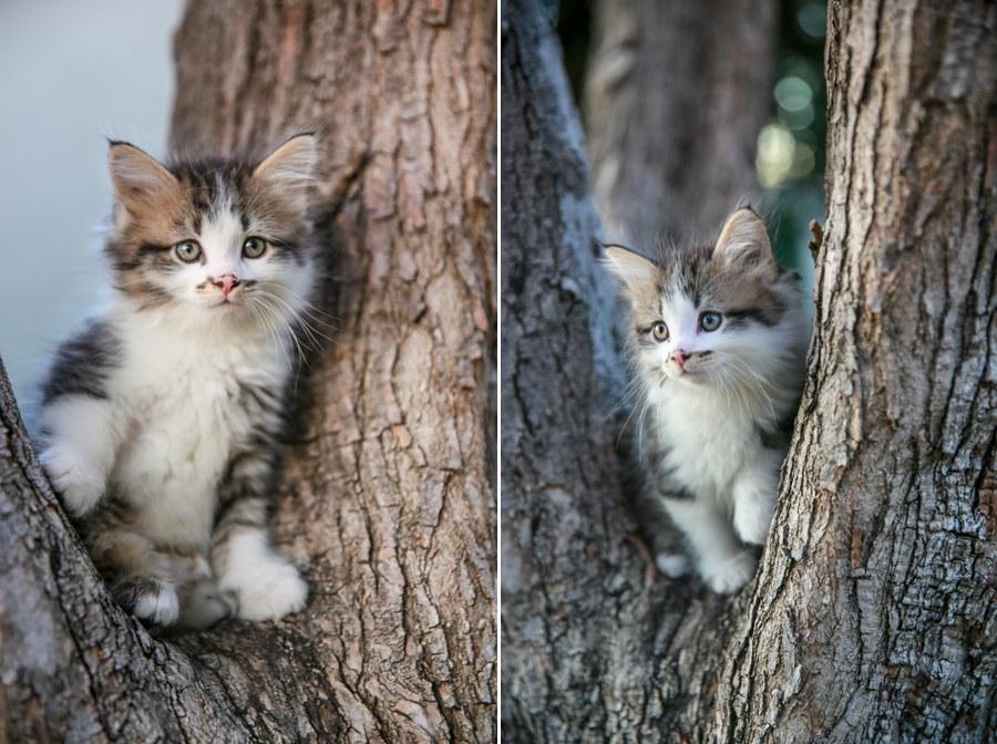 Charlie Kitten 12