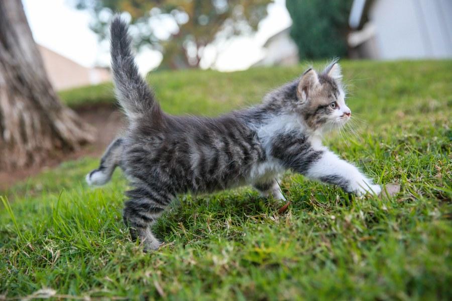 Charlie Kitten 13