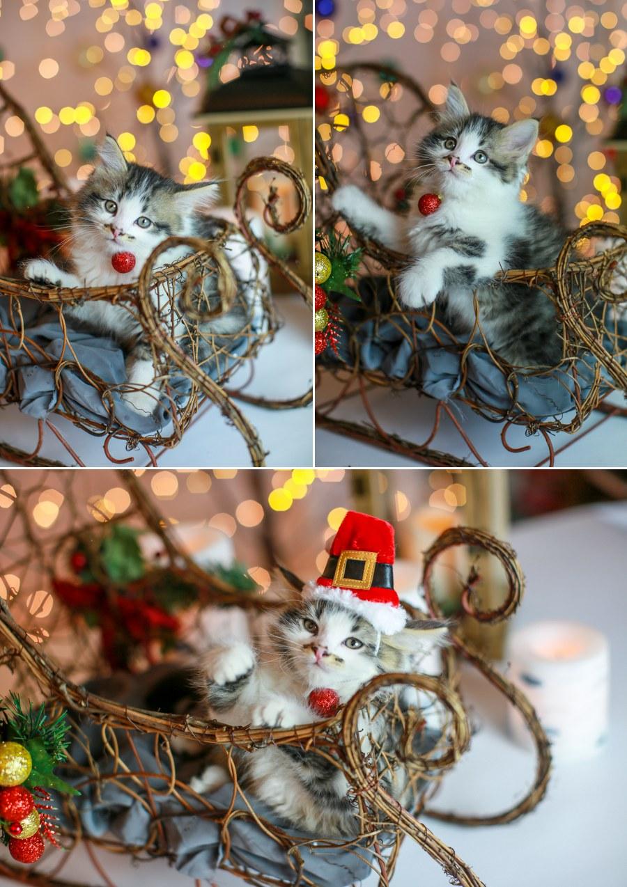 Charlie Kitten 18