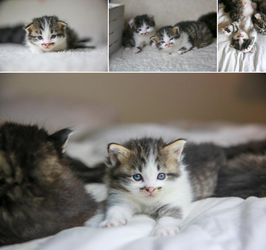 Charlie Kitten 2