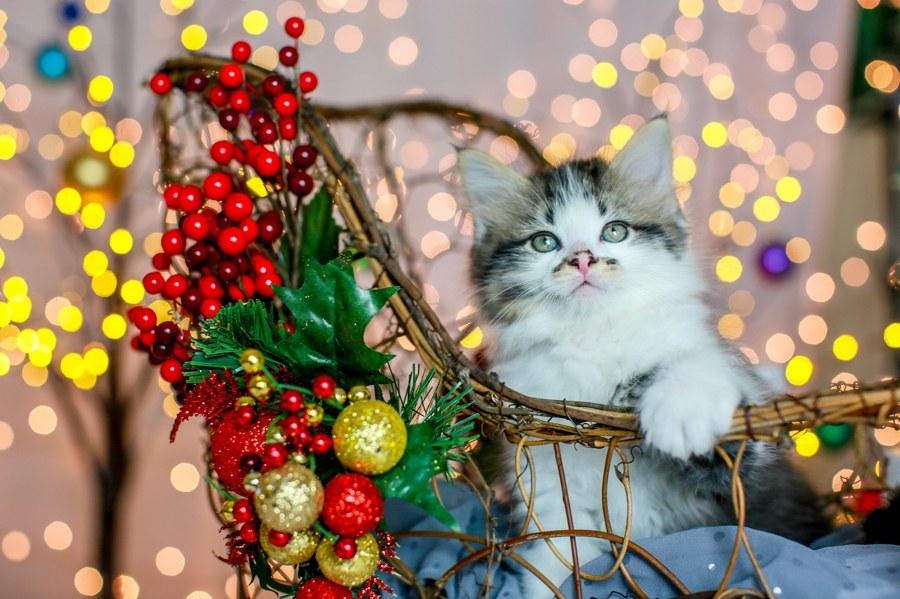 Charlie Kitten 22
