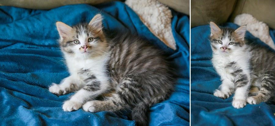 Charlie Kitten 25