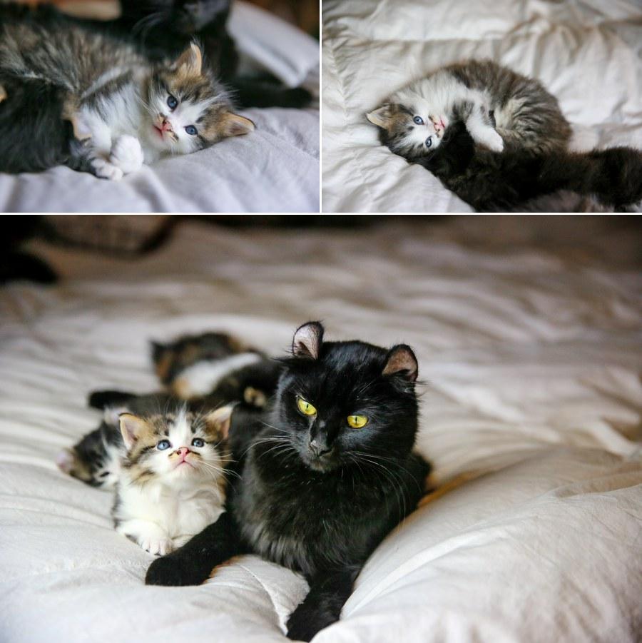 Charlie Kitten 5