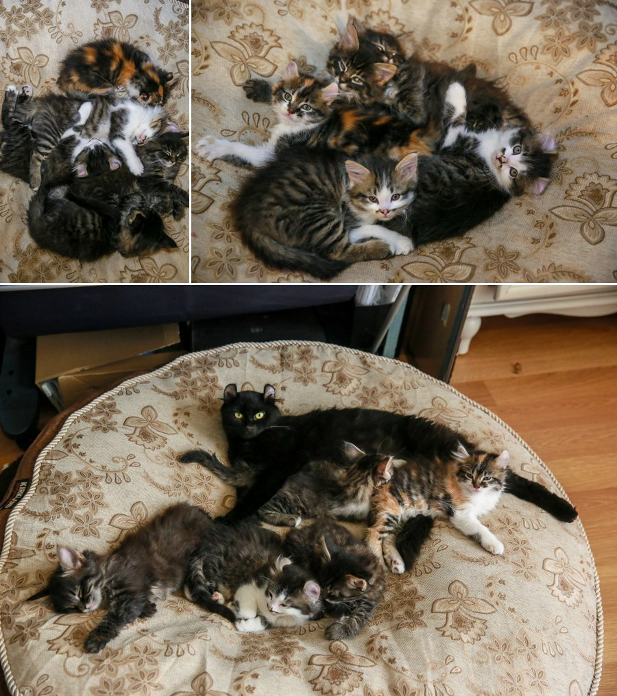 There are piles of kittens everywhere we go...they like to stick together when they sleep!