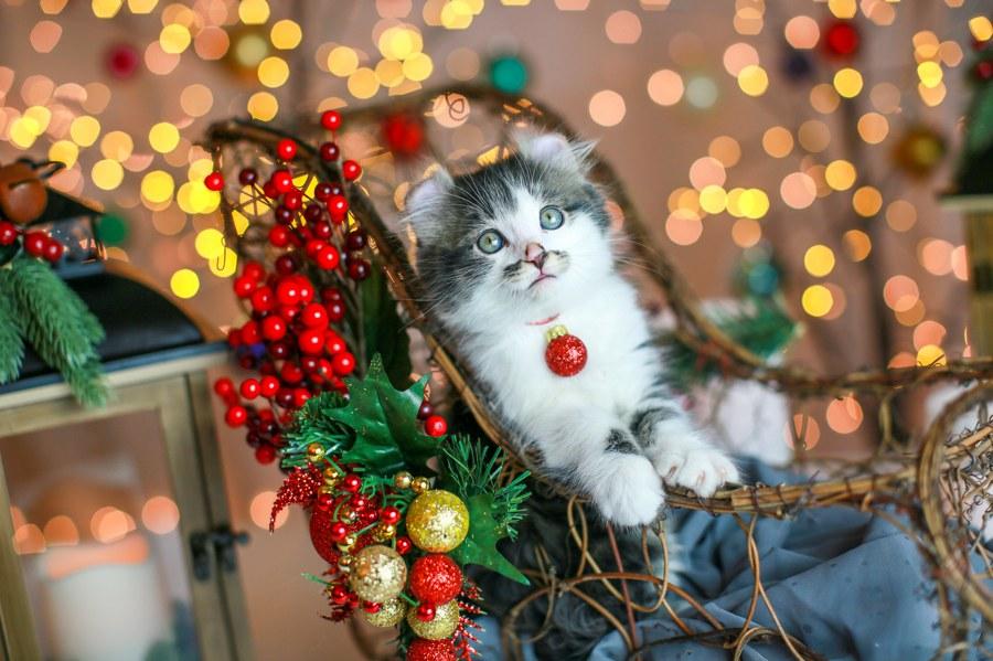 Romeo kitten 10