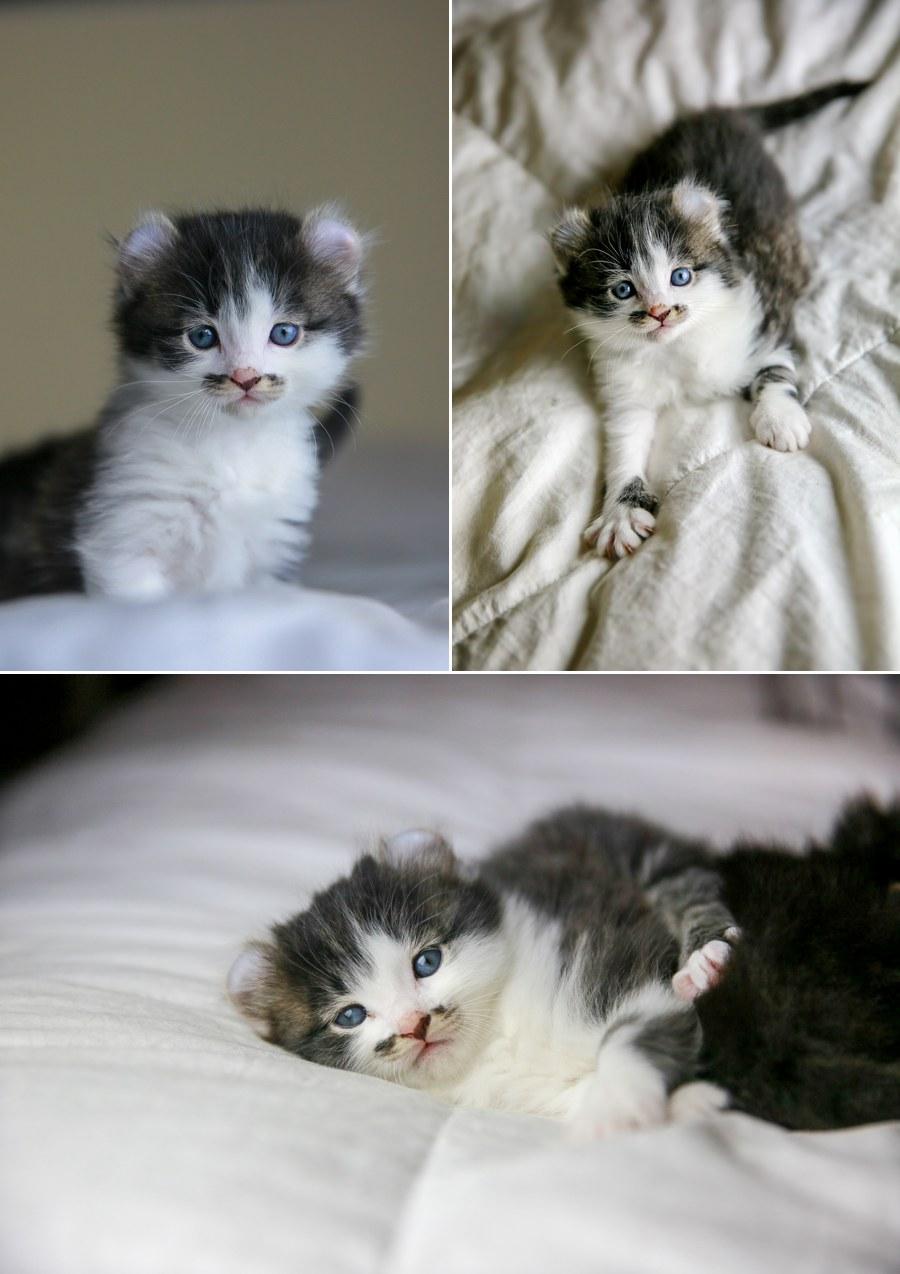 Romeo kitten 5