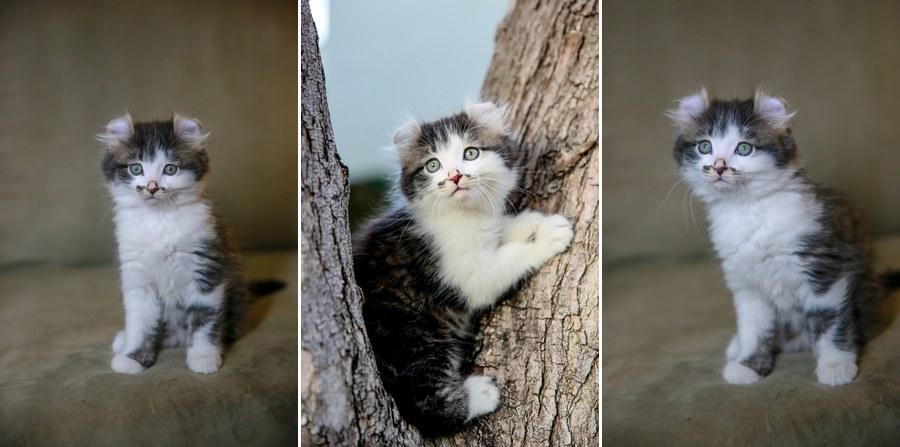 Romeo kitten 6
