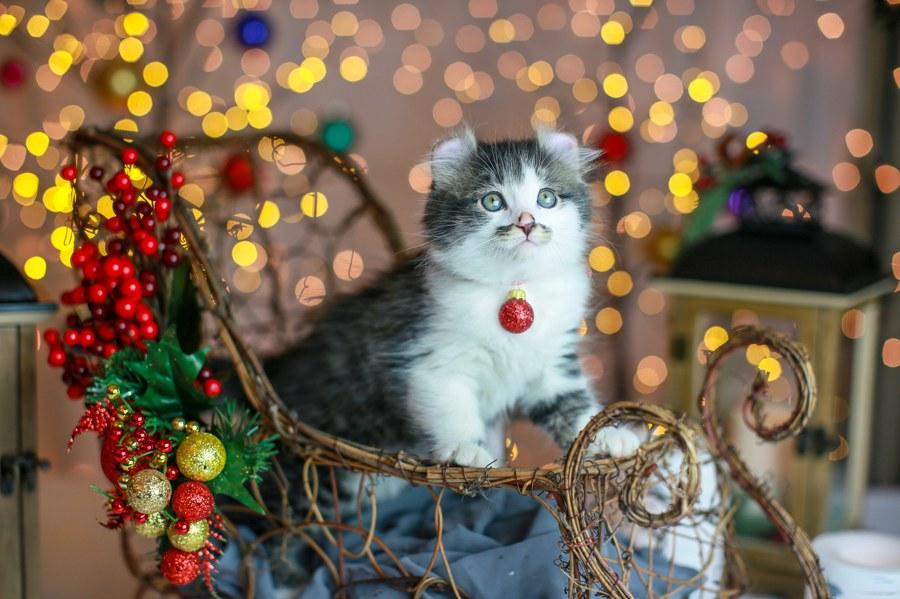 Romeo kitten 9