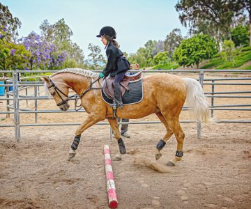 A girl and her horse {Orange County Equestrian Portraits}